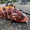 釣りファミ 釣りファミ日記 子供が釣りにハマるワケ