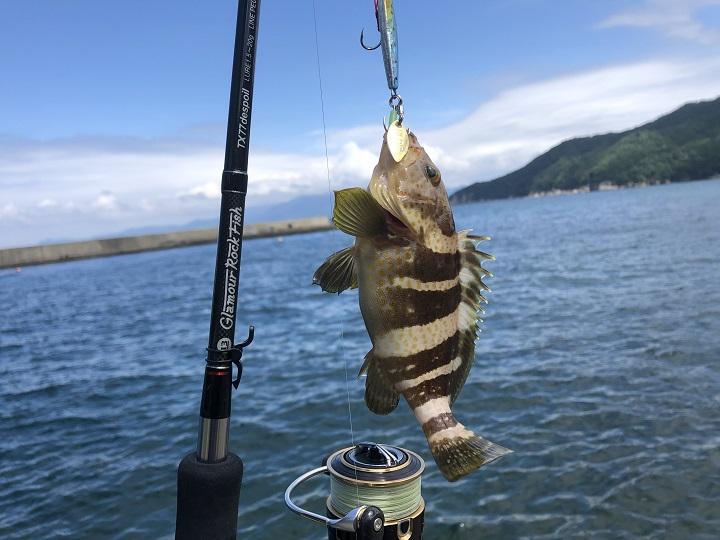 釣りファミ 京都・宮津、島陰漁港の釣りがマイブーム!スピンテールジグでデイゲームを楽しむ