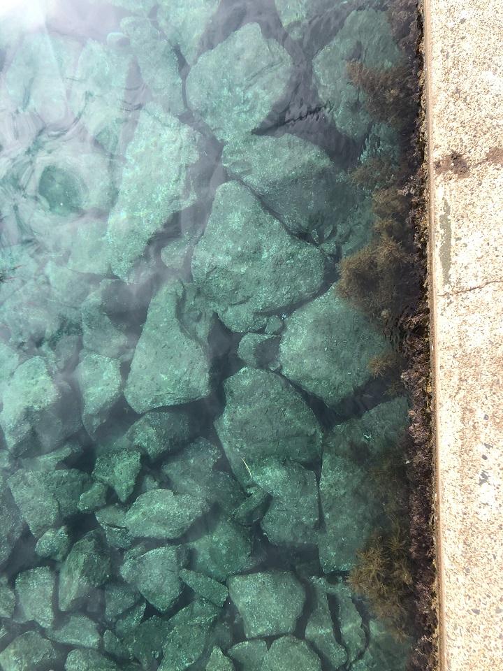 京都で釣り場に困ったら!子どももママも楽しめる初秋の伊根の海 海がきれい02