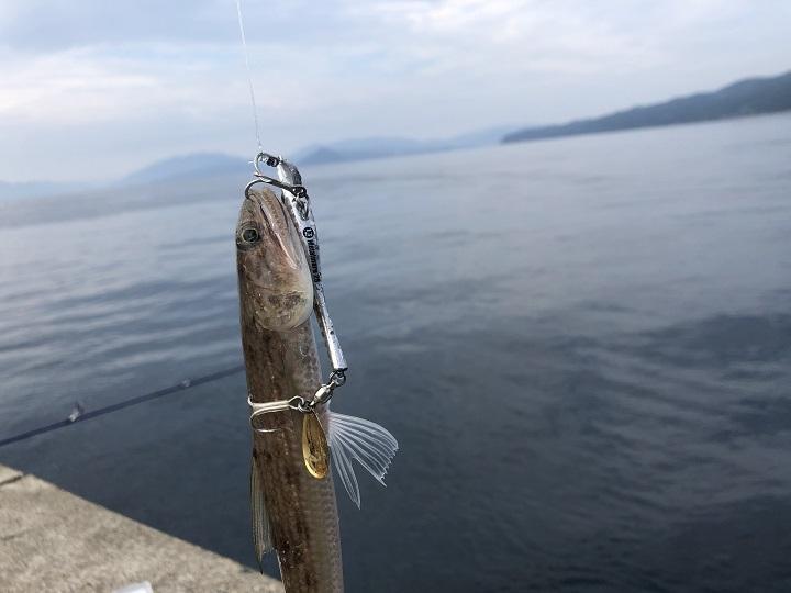 京都で釣り場に困ったら!子どももママも楽しめる初秋の伊根の海 エソ02