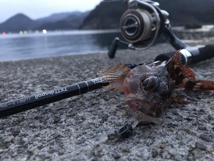 京都の釣り場、伊根網干場でデイエギングでアオリイカを狙う 落とし込み ガシラ