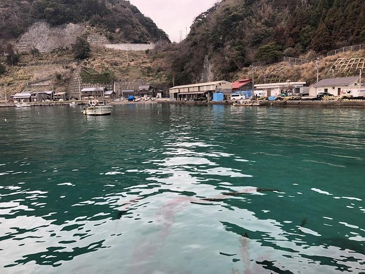 京都・伊根の釣り場、蒲入漁港でデイエギング エメラルドグリーン