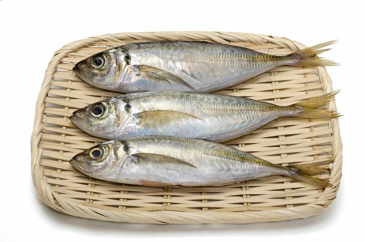 釣りファミ サビキ釣りのはじめ方!釣れる魚・揃える道具・釣り方を解説